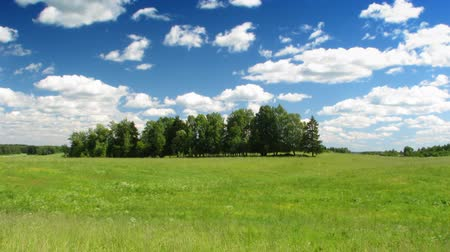 hill : summer meadow, blue sky, timelapse Stock Footage