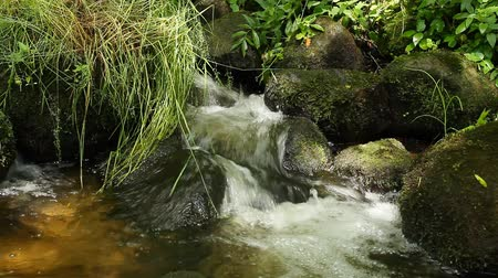 floresta tropical : forest stream