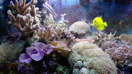 clima tropical : aquarium with fish and corral