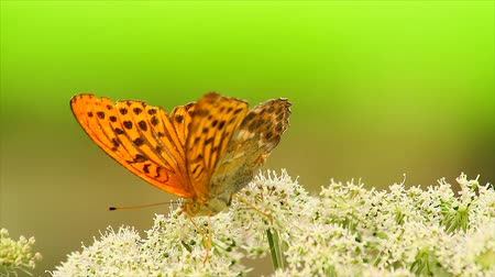 animais : butterfly on a flower