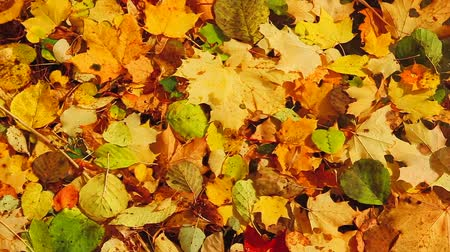 deep forest : autumn leaves in the lake Stock Footage