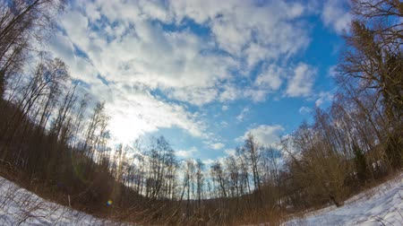 kimse : winter forest, timelapse Stok Video