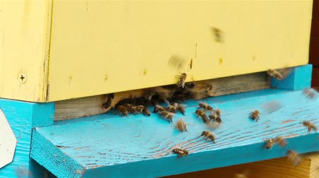 formations : Bees fly into the hive