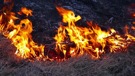 slash and burn : burning grass