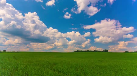 mavi gök : Summer landscape, green field, time-lapse Stok Video