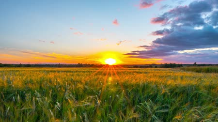 hill : Rural landscape and sunset time-lapse Stock Footage