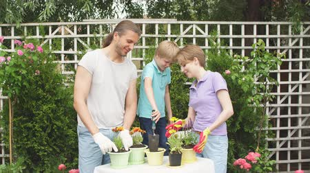 latino americana : Happy family gardening together and planting flowers in flowerpots in summer garden, close up.