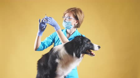 pulgas : the rabies vaccine. woman is going to vacccine in the medical center. close up photo. isolated yellow background.copy space.girl holding a injection against mites, fleas
