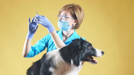 vacina : Rabies vaccine. woman is going to vacccine in the medical center. Girl holding a injection against mites, fleas