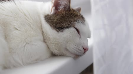 deslizamento : White country cat resting on the windowsill