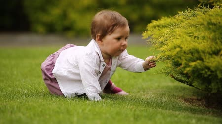 babygirl : A cheerful baby-girl is sitting on the green grass near the bush in the city park. Stock Footage