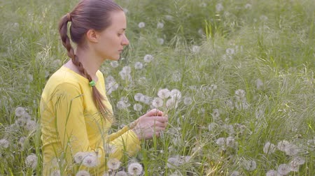 csak a fiatal nők : Young woman in yellow blouse collecting dandelions, sitting on weeds meadow, blowing dandelions seeds, flirting, smiling, throwing them out.
