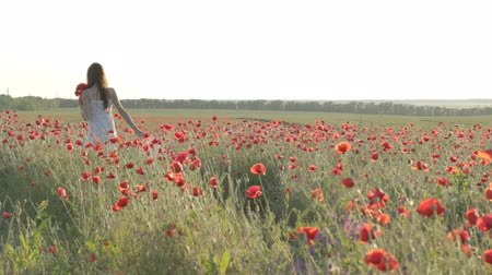 csak a fiatal nők : CLIP EDIT Young woman in white sundress waking through red poppies field, holding white hat, twisting, dancing enjoying free time, resting on nature, smiling, flirting, touching petals of flowers. Stock mozgókép