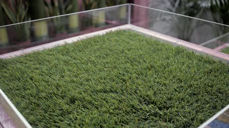 roll up : Selection of artificial grass carpet close up shop supermarket