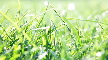 freshness background : blurred grass background with water drops