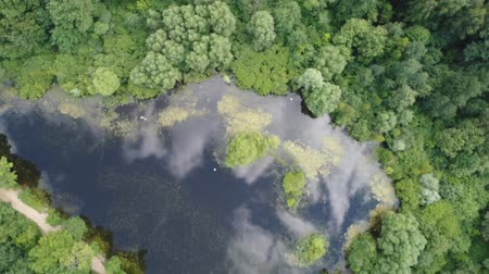 Top view of a beautiful forest lake. Aerial video shooting.