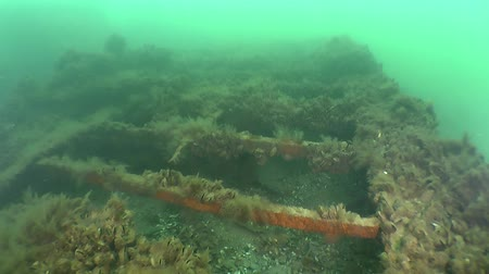 restaurálás : Camera movement over the deck of the wreck overgrown with algae.