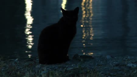 szieszta : Black cat in the twilight on a background of water which reflects lights of embankment. Greece.