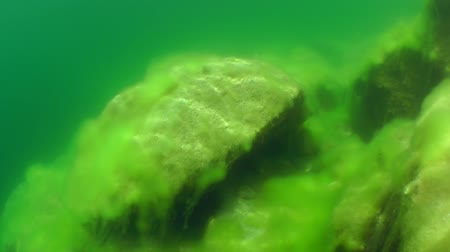 uw : Swim over the stones lying in shallow water. Stock Footage