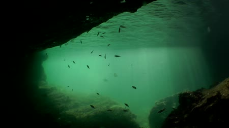 penetrating : Underwater landscape: Exit the grotto with a curtain of sun rays penetrating the water column where the fish swim. Stock Footage