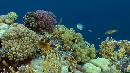 regal : Amazing picture of a coral reef with various kinds of coral and brightly colored fish.