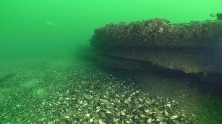 chalky : Interesting underwater landscape: the camera moves along the winding limestone rocks. Stock Footage