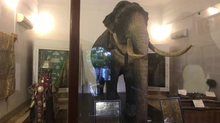 sagrado : Kandy, Sri Lanka, November 20, 2019, Sri Dalada Maligawa elephant statue in museum 4K