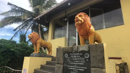 seylan : Matara, Sri Lanka, November 25, 2019, sculptures of tigers at the temple 4K Stok Video