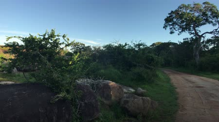 Yala, Sri Lanka, nature and beautiful sky 4K