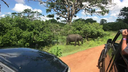 kutsal : Yala, Sri Lanka, elephant passes by cars 4K Stok Video
