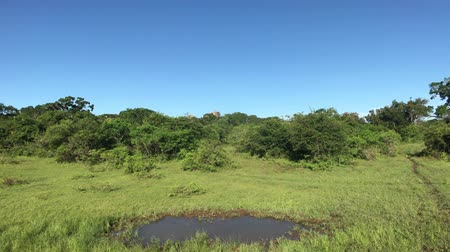 seylan : Yala, Sri Lanka, a small puddle in the middle of a clearing 4K Stok Video
