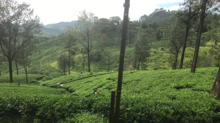Ella, Sri Lanka, on the way along tea plantations 4K