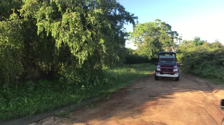 seylan : Yala, Sri Lanka, November 30, 2019, the movement of tourists in a jeep on a forest road 4K Stok Video