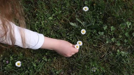 rumianek : Young girl picking early spring daisy flowers