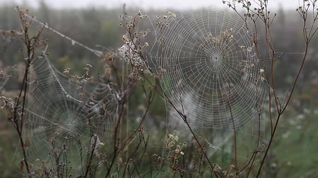 pókháló : Spider web in the light of the rising sun in fall autumn