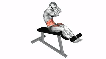 especially : Twisting to turn on the Roman chair. Video guides exercising for bodybuilding Target muscles are marked in red.