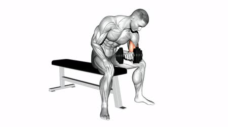 rectus : Collapsing on the floor of the trunk. Video guides exercising for bodybuilding Target muscles are marked in red.