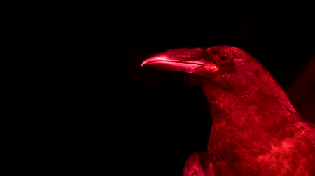 мифический : Horrible raven in red light looks down