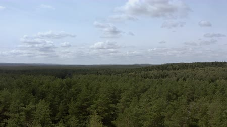 Birds eye view of beautiful green forest. Aerial view Stock Footage