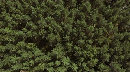 Beautiful aerial view of a mixed forest. Aerial view Stock Footage