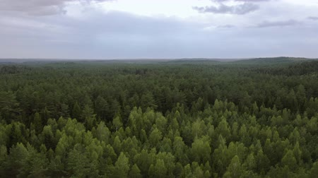 Green summer aerial view. The drone is flying forward. Mixed forest. Aerial view