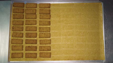 Stop motion. Rectangular cookies are laid out on a baking sheet Stock Footage