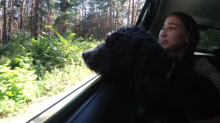 A black dog looks out of the car window into the forest, sitting on the childs lap in the back seat of the car. Close up. Portrait. View from the car. 4K. 25 fps