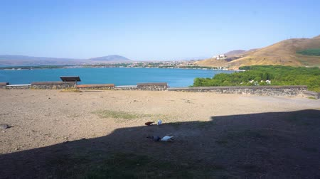 armenia : Lake Sevan Scenery Common View with Four Pigeons Eating Stock Footage