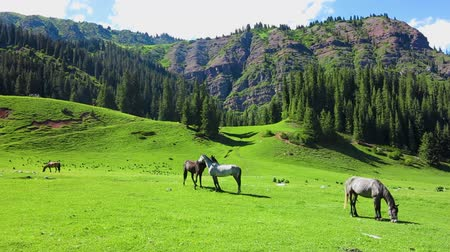alanlar : Karakol Glen Defile Snow Capped Mountains Horses and Forest with Blue Sky Background Stok Video