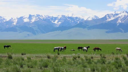 koń : Naryn Region At Bashy Valley With Horses And Snow Capped Mountains Blue Sky Background