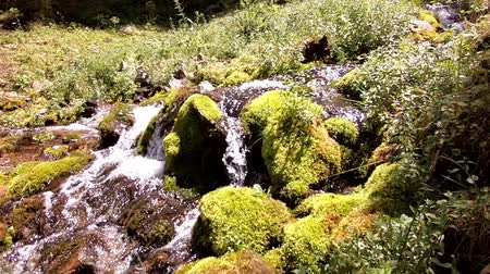 pamir : Small river in forest Stock Footage