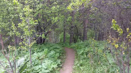 osika : Panning through a forest while trekking the mountain in summer. Hiking trail in woods