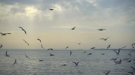 judgment day : Slowmotion, beautiful sky and birds fly over the sea, 240 fps
