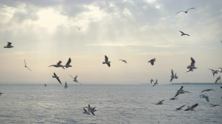 judgment day : Beautiful sky and birds fly over the sea, uhd.